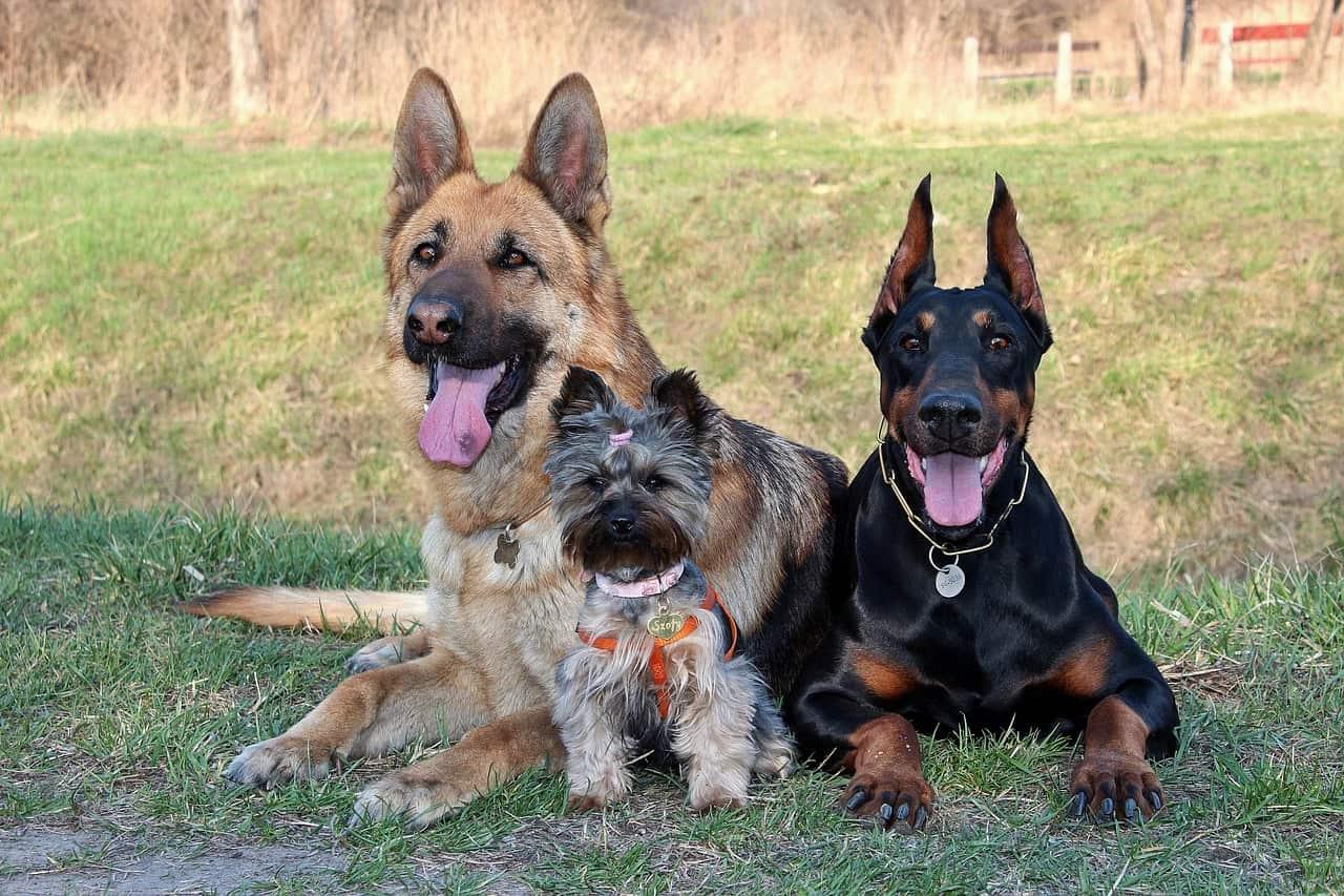 risPETtiamoli cani Quanti anni ha il tuo cane? Mondo Cane