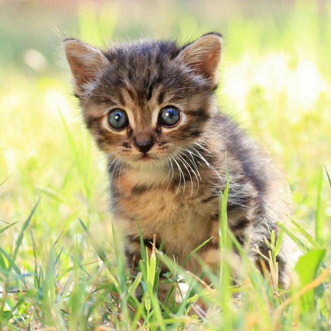 risPETtiamoli gatto-1 I gatti, i proverbi e i modi di dire Mondo Gatto