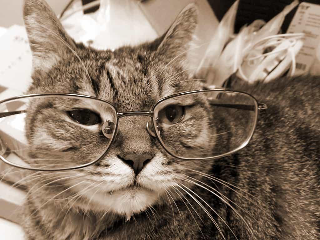 risPETtiamoli gattoanziano NONNO-GATTO Mondo Gatto
