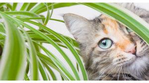 risPETtiamoli piantetossiche-per-i-gatti-300x167 Alimenti e piante tossiche per il gatto e per il cane