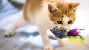 risPETtiamoli preda Perchè un gatto domestico va a caccia? Mondo Gatto