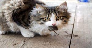 risPETtiamoli preda2-300x157 Perchè un gatto domestico va a caccia? Mondo Gatto