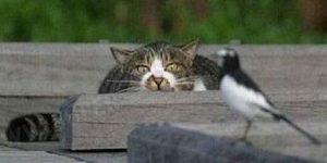 risPETtiamoli preda3-300x150 Perchè un gatto domestico va a caccia? Mondo Gatto